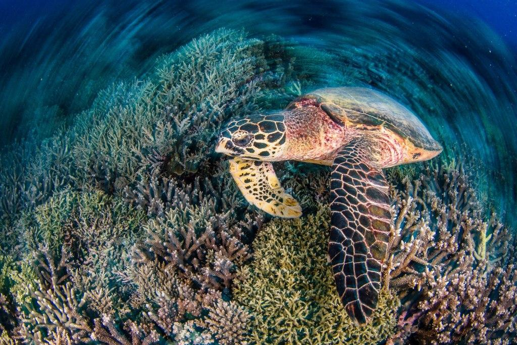 Tubbataha Liveaboard Diving Trip - Diving with Turtles. Buy Uncharted Philippines Gift Certificates and Gift Cards at Gifted.PH online